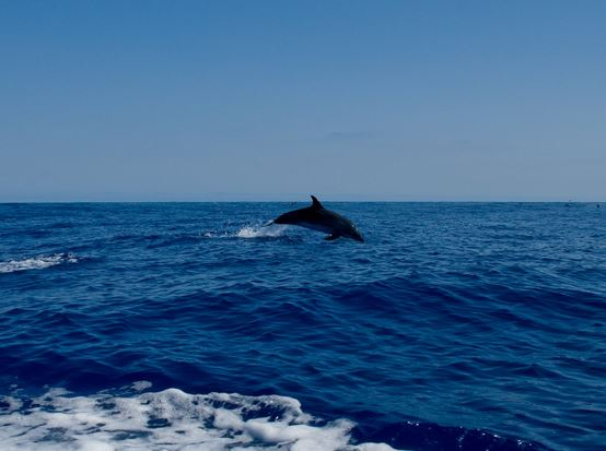 Los delfines se llaman los unos a los otros por su nombre. Foto: Bart Bernardes.