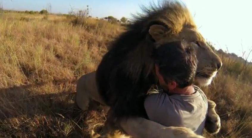 Image Result For David And Lions