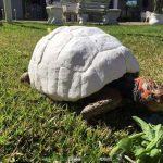 20160525-2-1-salvan-vida-tortuga-caparazon-impres-3d