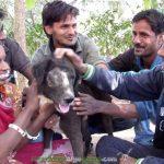 20160529-1-2-reconstruyen-la-cara-a-un-perro-abandonado-en-india