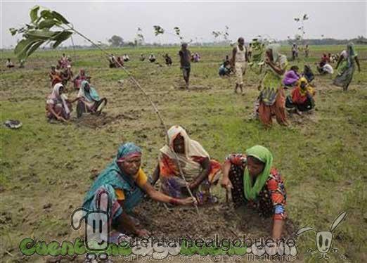 Plantan cerca de 50 millones de árboles en india en 24 horas ...