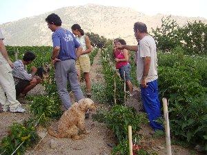 Las Torcas, ejemplo de agricultura sostenible en Granada
