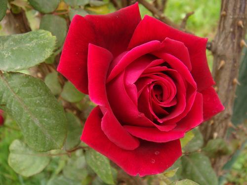 Hoy es San Valentín, una vez al año…