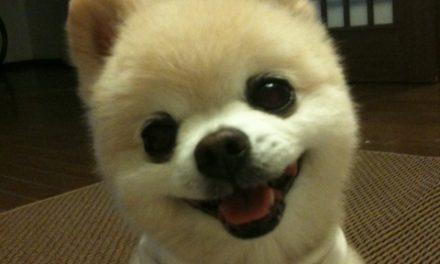 Shunsuke el perrito peluche