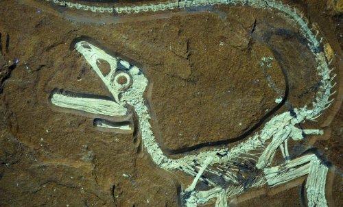Descubren el dinosaurio mejor conservado de Europa