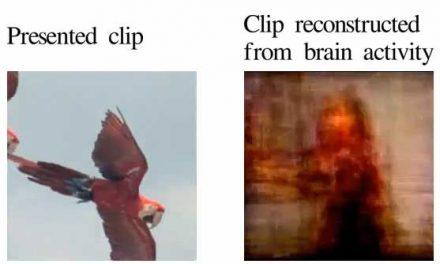 Inventan un escáner cerebral que muestra lo que vemos
