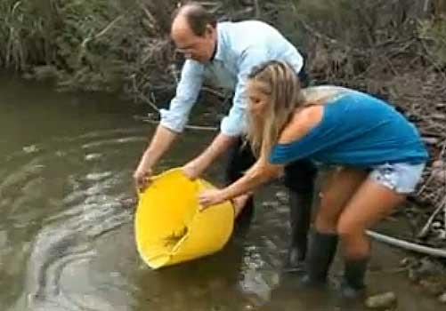 Liberan a 4.800 alevines de anguila europea en los humedales de Cádiz