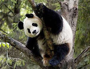 WWF celebra su 50º aniversario con la entrega de los premios Panda de Oro