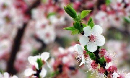 La Primavera ya está aquí =)
