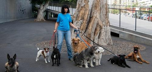 Alejandra, presidenta de la Asociación Terria Blue con los perros que participan en las terapias y actividades