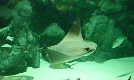 Crean la reserva marina más grande del mundo en Australia