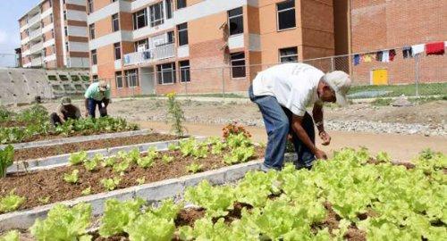 Agricultura Urbana en Venezuela