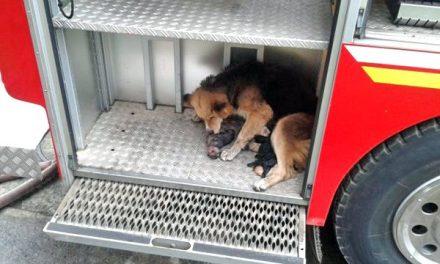 La perrita Amanda salva a sus cachorros de un incendio