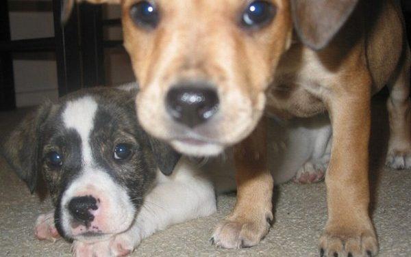 Jornada de Vacunación gratuita para mascotas en Venezuela