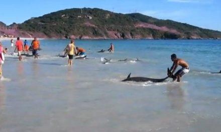 30 delfines rescatados por bañistas
