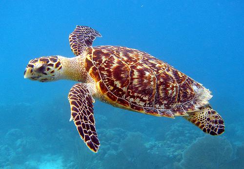Protegen huevos de tortuga carey en un conocido balneario de la República Dominicana