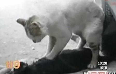 El gato que salvó a su amiga