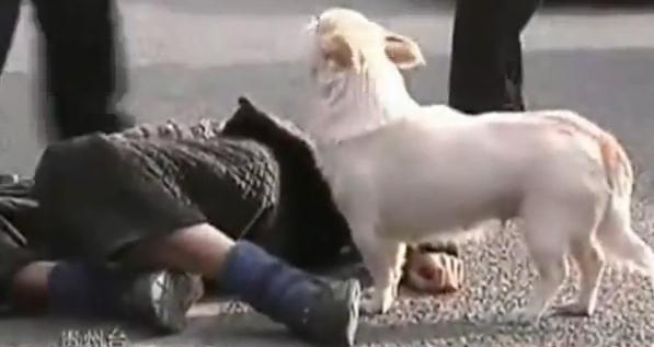 Un perro cuida a su dueño tras su desmayo en plena calle