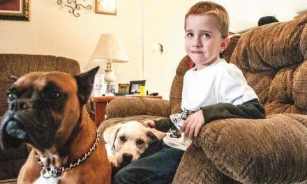 Los perros de un niño de 6 años lo salvan de morir congelado