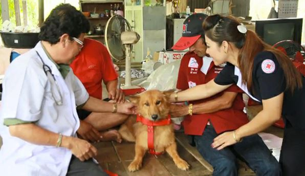 Perro salva la vida a un bebé abandonado en un vertedero