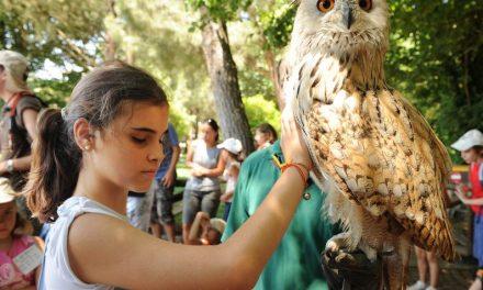 Campamentos de verano para niños de la ONCE