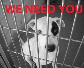 Un perro enjaulado que necesita tu ayuda. Cartel de Lobby for Animals