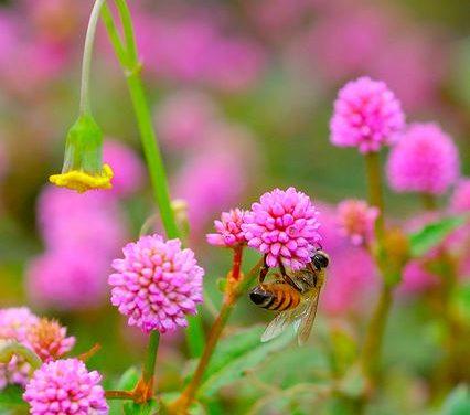 Demuestran que las flores emiten señales eléctricas