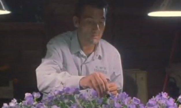 Proyección de la película Flower Power (Green Fingers) en Valle San Lorenzo, Arona (Tenerife)