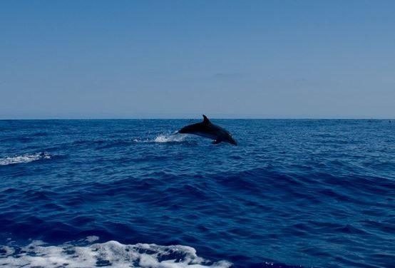Los delfines se llaman unos a otros por su nombre