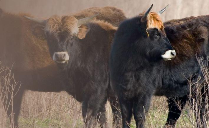 Atapuerca tendrá una reserva de animales prehistóricos en octubre