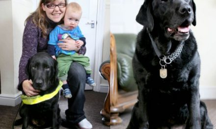 Una perra guía salva a un bebé de ser atropellado