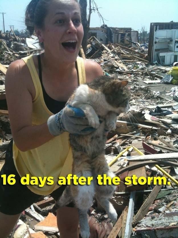 Joven encontrando a su gato 16 días después de que una tormenta destrozara la ciudad