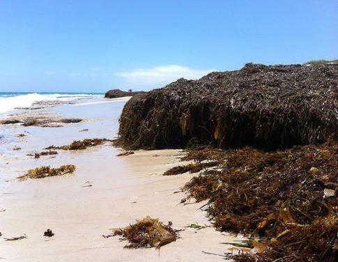 Plantas marinas como cemento ecológico para luchar contra el cambio climático