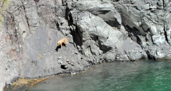 Rescatan a perro atrapado en atracción turística en Sudáfrica