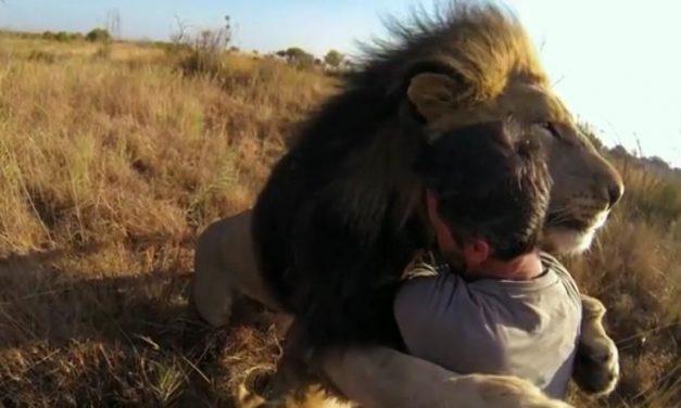 El susurrador de leones