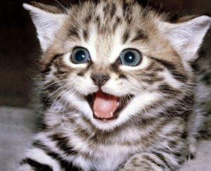 Pon un gato en tu vida...