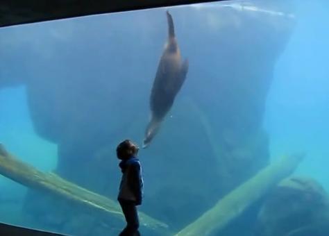 """Niño con Asperger pasa """"el mejor día de su vida"""" gracias a un león marino"""