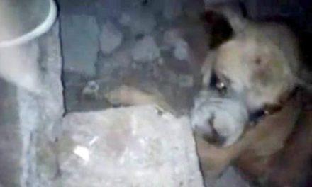Jóvenes rescatan a un perro tras terremoto en Chile