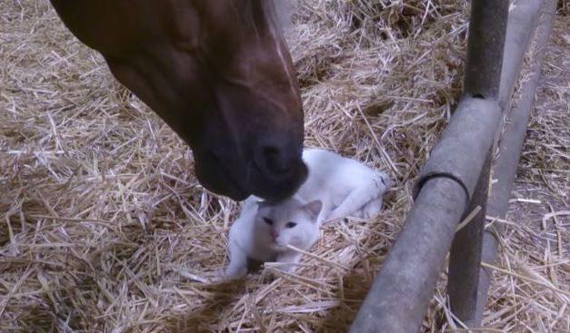 Conmovedor vídeo de un caballo cuidando de un gato
