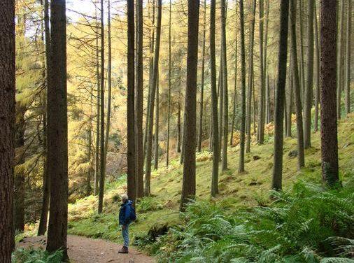 Crean una plataforma 'on line' para la protección de los bosques en el mundo