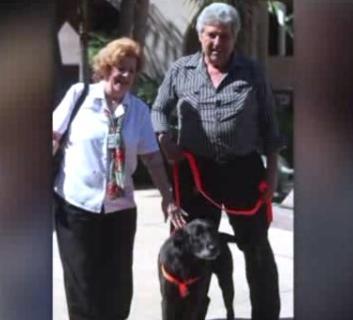 Un perro perdido en 2007 se reencuentra con su familia