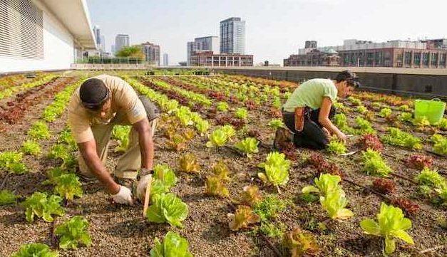 Una granja en un tejado de Brooklyn