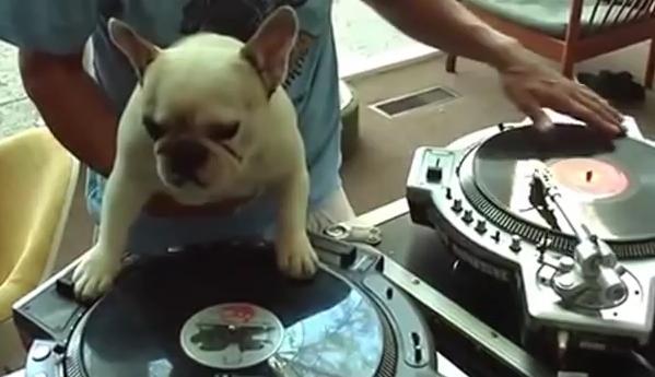 Un perro DJ