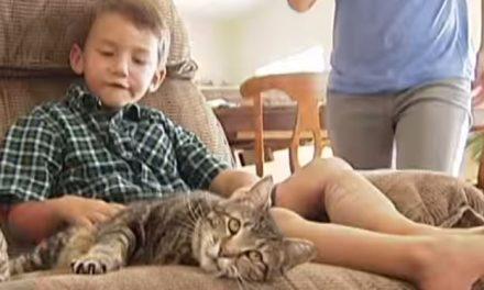 La gata de un niño le salva de un ataque de un perro