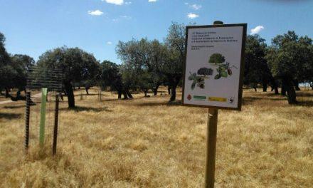 Correos y WWF inauguran el Bosque de Valencia de Alcántara
