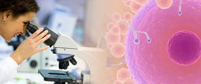 Una 'spin off' de la Universidad de Sevilla mejora la criopreservación de gametos y embriones