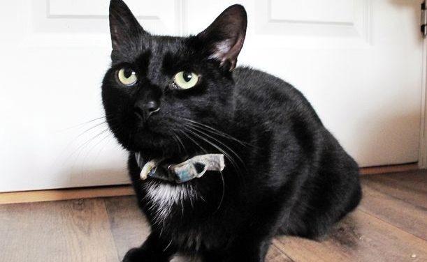 Un gato le salva la vida a su dueña