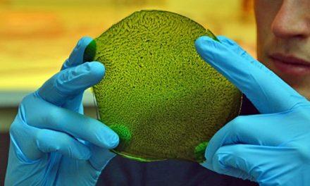 Desarrollan una hoja sintética que hace la fotosíntesis como las plantas
