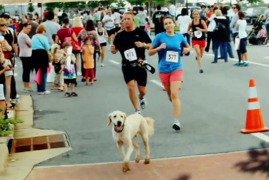 Dozer, el Perro Maratoniano.