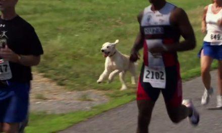 Un perro finaliza una media maratón en favor de la investigación contra el cáncer